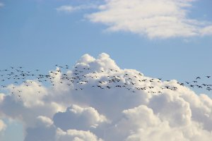 SAP Central Finance Migration: Tax Compliance Spells Trouble