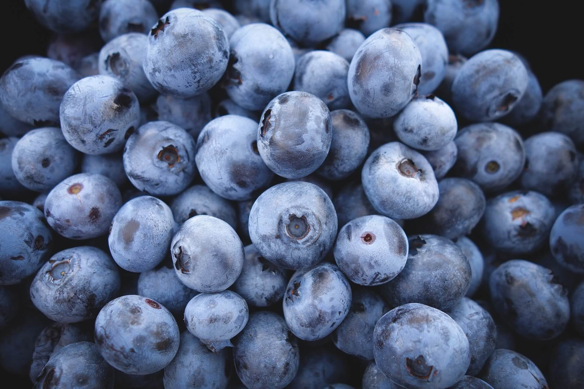 e-archiving blueberries